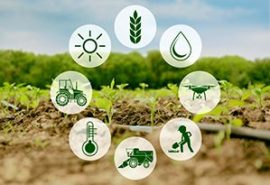 300x205-Agriculture-economics-300x205