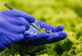 300x205-Green-Technology-300x205